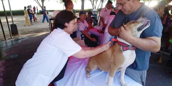 Realiza Salud Sonora campaña de vacunación de mascotas