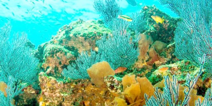 Arrecife Mesoamericano peligra por deforestación