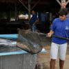 Venda de peixes estará disponível na Feira Digital a partir de segunda-feira (06)