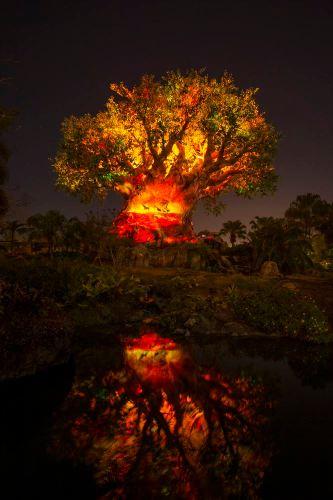 Tree of Life Awakens at Disney's Animal Kingdom at Night (c)Disney