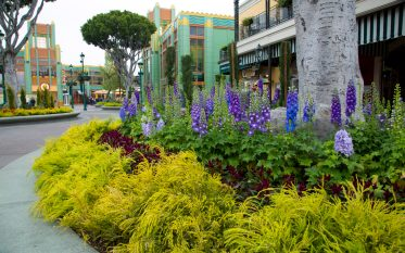 ANAHEIM, Calif., Friday, May 5, 2017: Regular Downtown Disney District guests – and probably some who have never been in the District before – are noticing a sensational transformation. Along with recently opened new shops – PANDORA, Curl Surf, a second Starbucks location – the face of Downtown Disney District is being refreshed with bursts of color throughout its pots and planters. Guests who take a closer look will see area-specific layouts with the height and color of plants varying, for example, from the ground-level flowers in planters near World of Disney and Naples Ristorante e Pizzeria to the higher-profile plantings around The LEGO Store and Tortilla Jo's. In fact, since both Naples Ristorante e Pizzeria and Tortilla Jo's have added additional outdoor seating, their respective new seating areas are enhanced with new pots and fresh, colorful plants. More than 8,000 new plants have been added to the Downtown Disney District. (Scott Brinegar/Disneyland Resort)