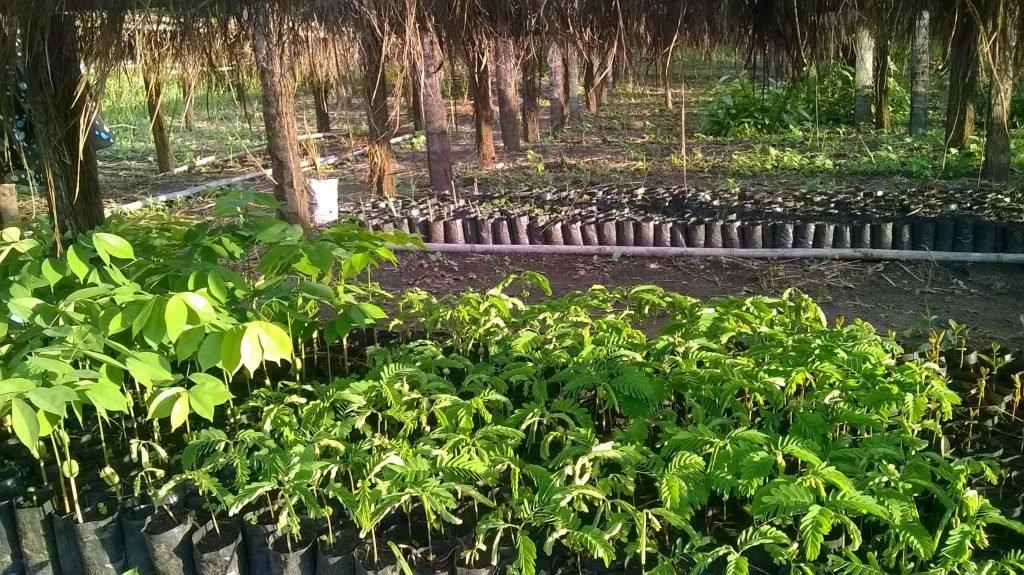 Happy native tree seedlings