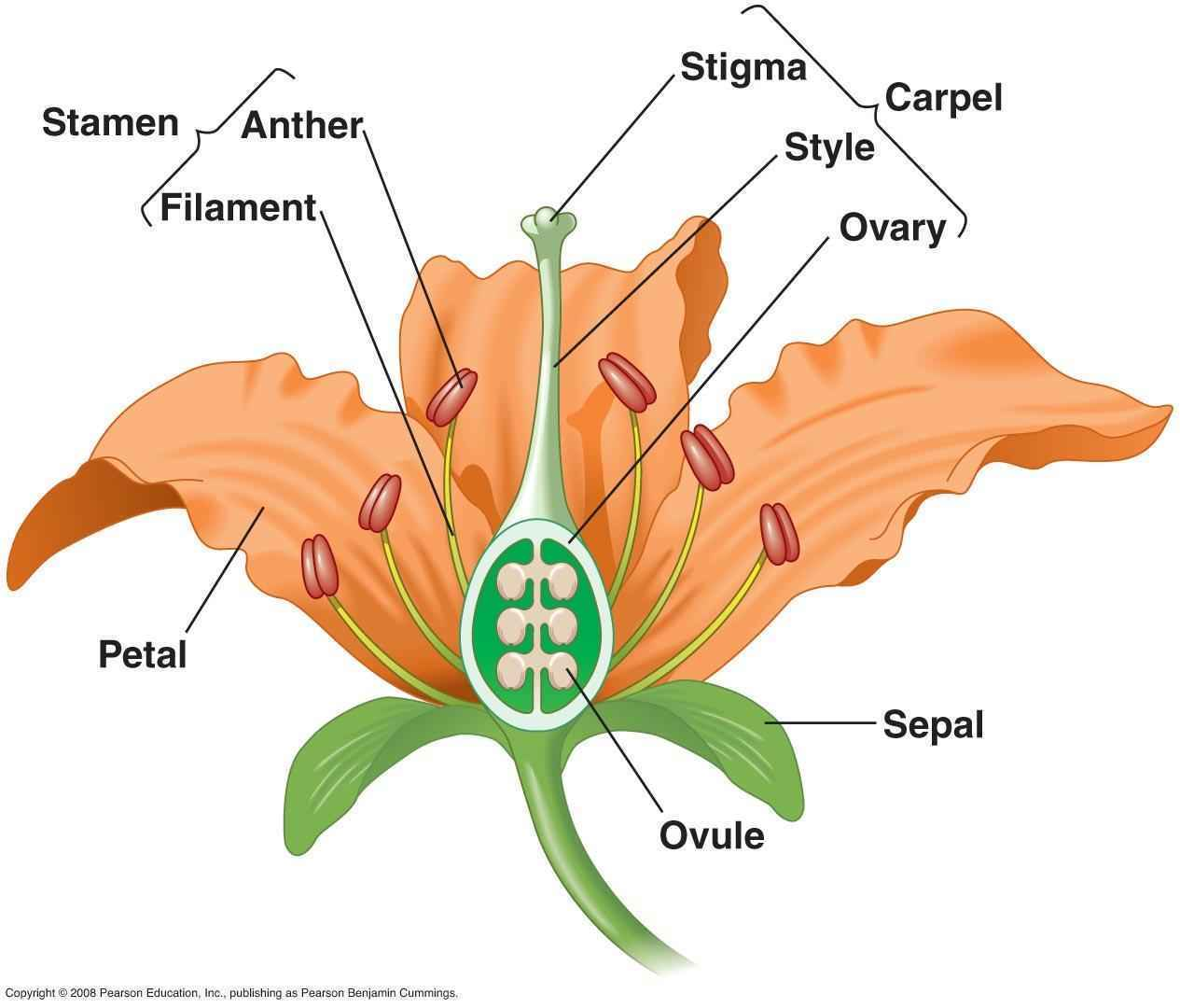 diagram of perfect flower lily 1990 ford bronco wiring science 6a h w 7 8 15 dps tapi class