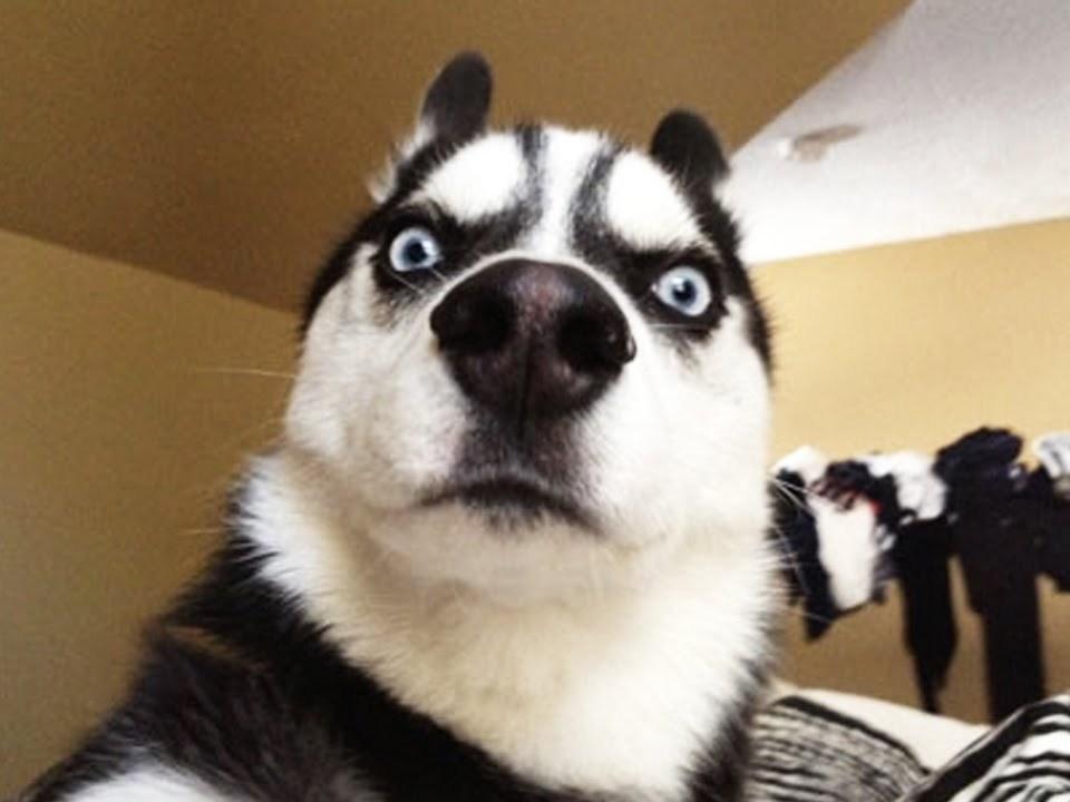 Κομμωτήριο Σκύλων Άνω Γλυφάδα