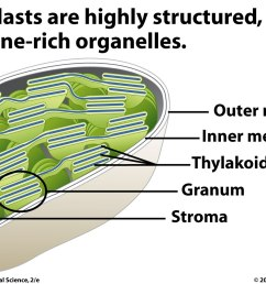 location of photosynthesis machinery in chloroplasts [ 1400 x 900 Pixel ]