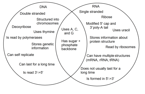small resolution of the image is a venn diagram the dna circle contains double stranded structured
