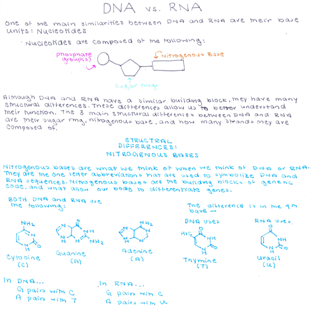 medium resolution of one of the similarities between dna and rna are their base units nucleotides nucleotides