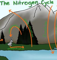 a diagram showing some ways in which nitrogen is transferred around the biosphere and atmosphere  [ 1920 x 972 Pixel ]