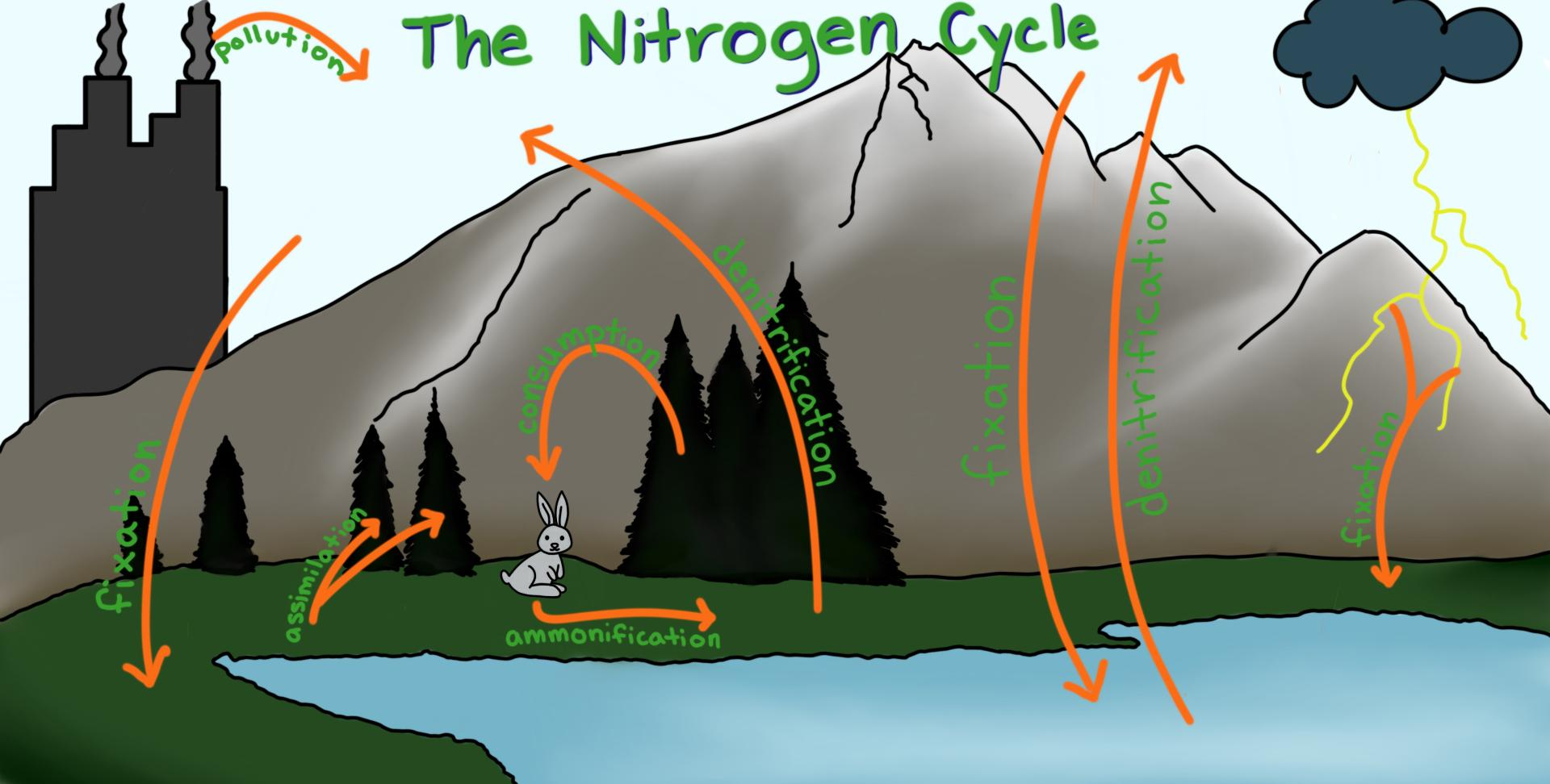 hight resolution of a diagram showing some ways in which nitrogen is transferred around the biosphere and atmosphere