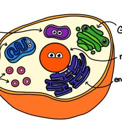 a drawing of a cell with a few examples of organelles  [ 1920 x 972 Pixel ]