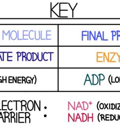 this is a key which goes with the diagram below it  [ 1920 x 972 Pixel ]