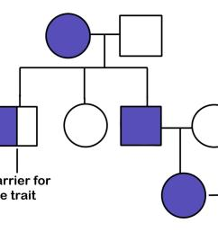 a pedigree diagram a female with a trait has children with a male without the [ 1920 x 972 Pixel ]