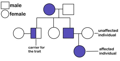 small resolution of a pedigree diagram a female with a trait has children with a male without the