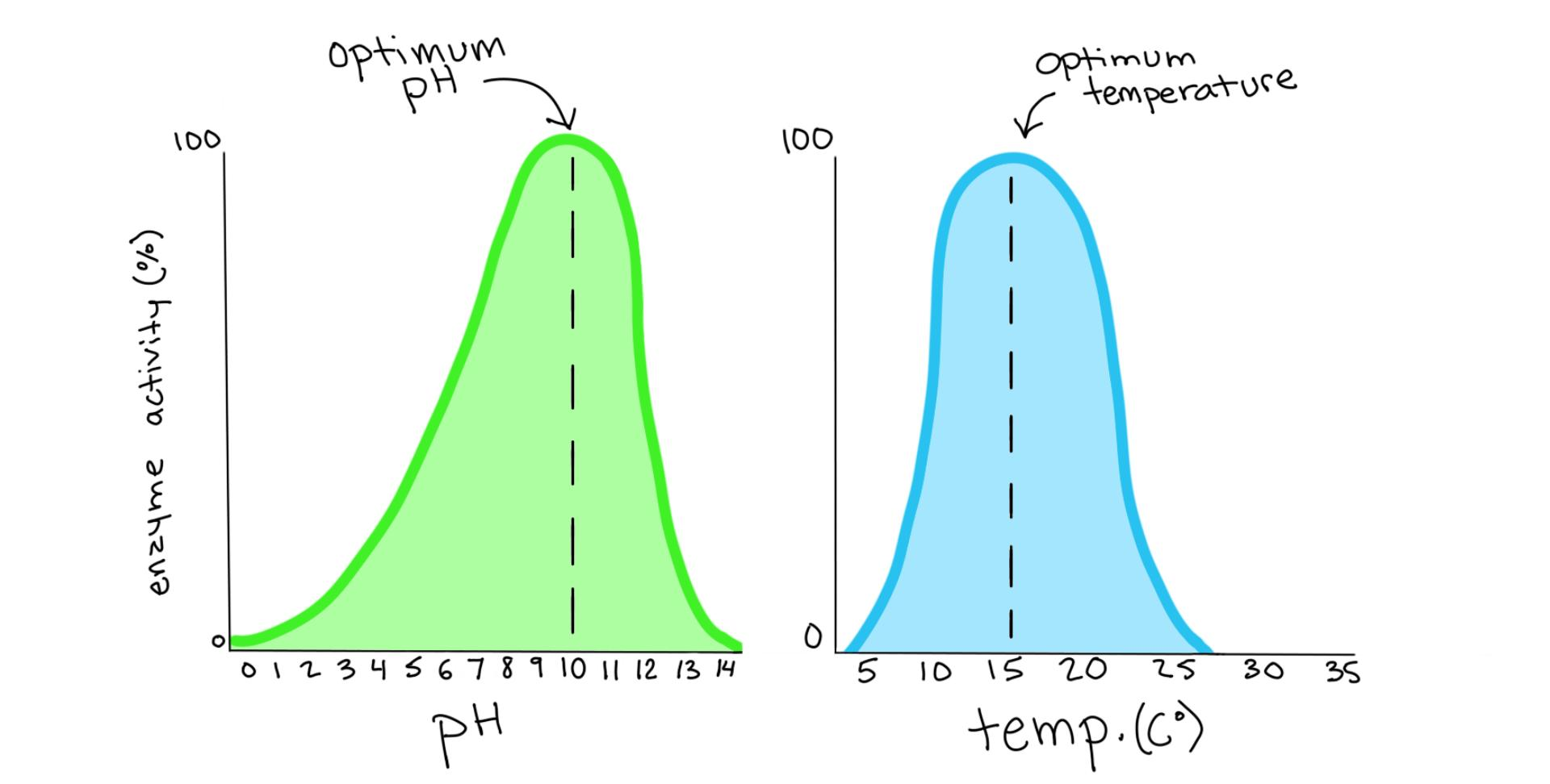 hight resolution of two graphs showing the level of activity for a certain enzyme at different ph and temperatures