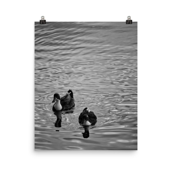 Ducks in Water Photo paper poster 00008
