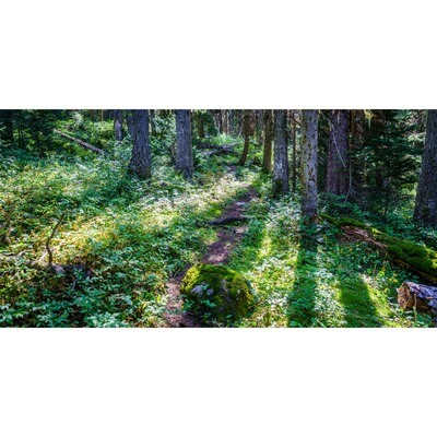 Larey McDaniel -- Enchanted Forest