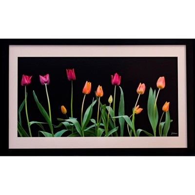 Jeff Lane -- Tulips in the Evening Glow
