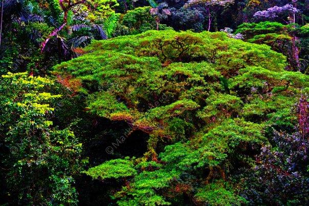 Amazon Rainforest Costa Rica 00035