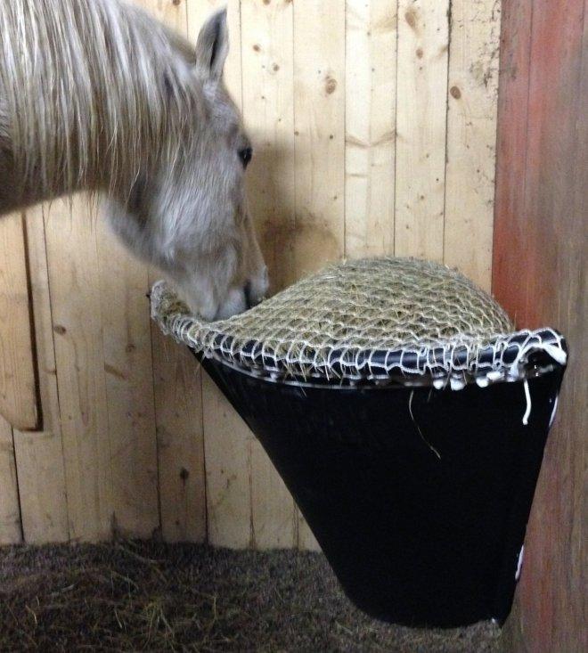 Horse Corner Net C