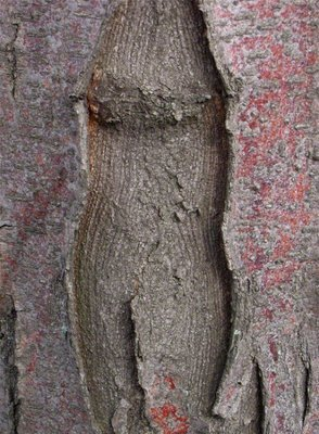 Nude of the Bark