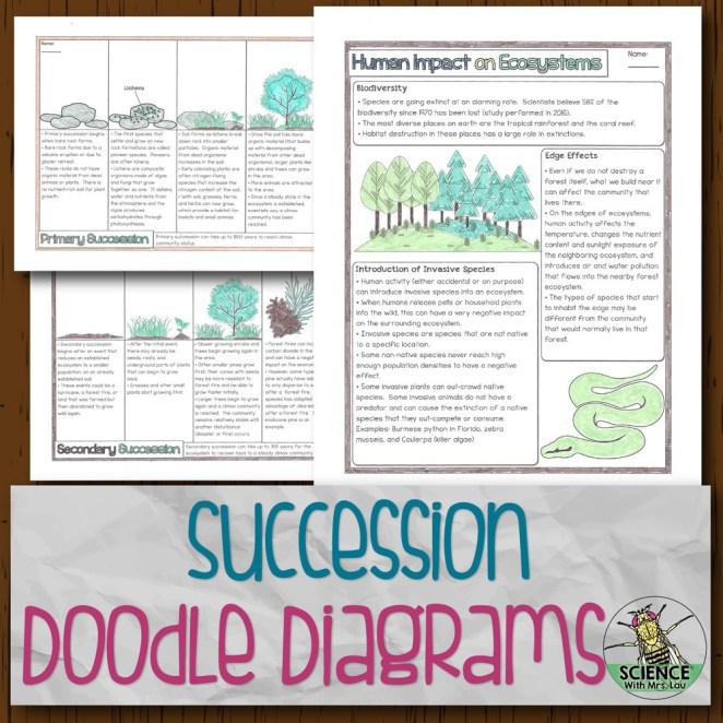 Succession Doodle Diagrams