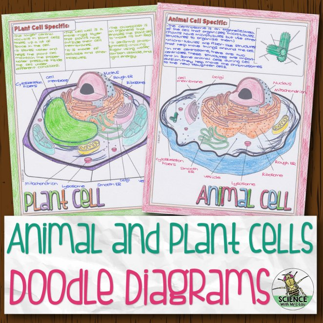 Animal and Plant Cells Doodle Diagrams | Store - Science ...