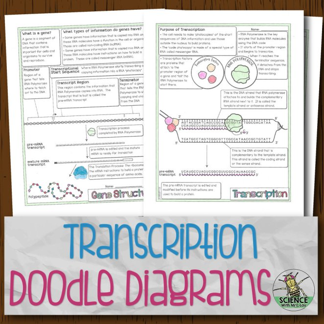 Transcription and mRNA Processing Doodle Diagrams