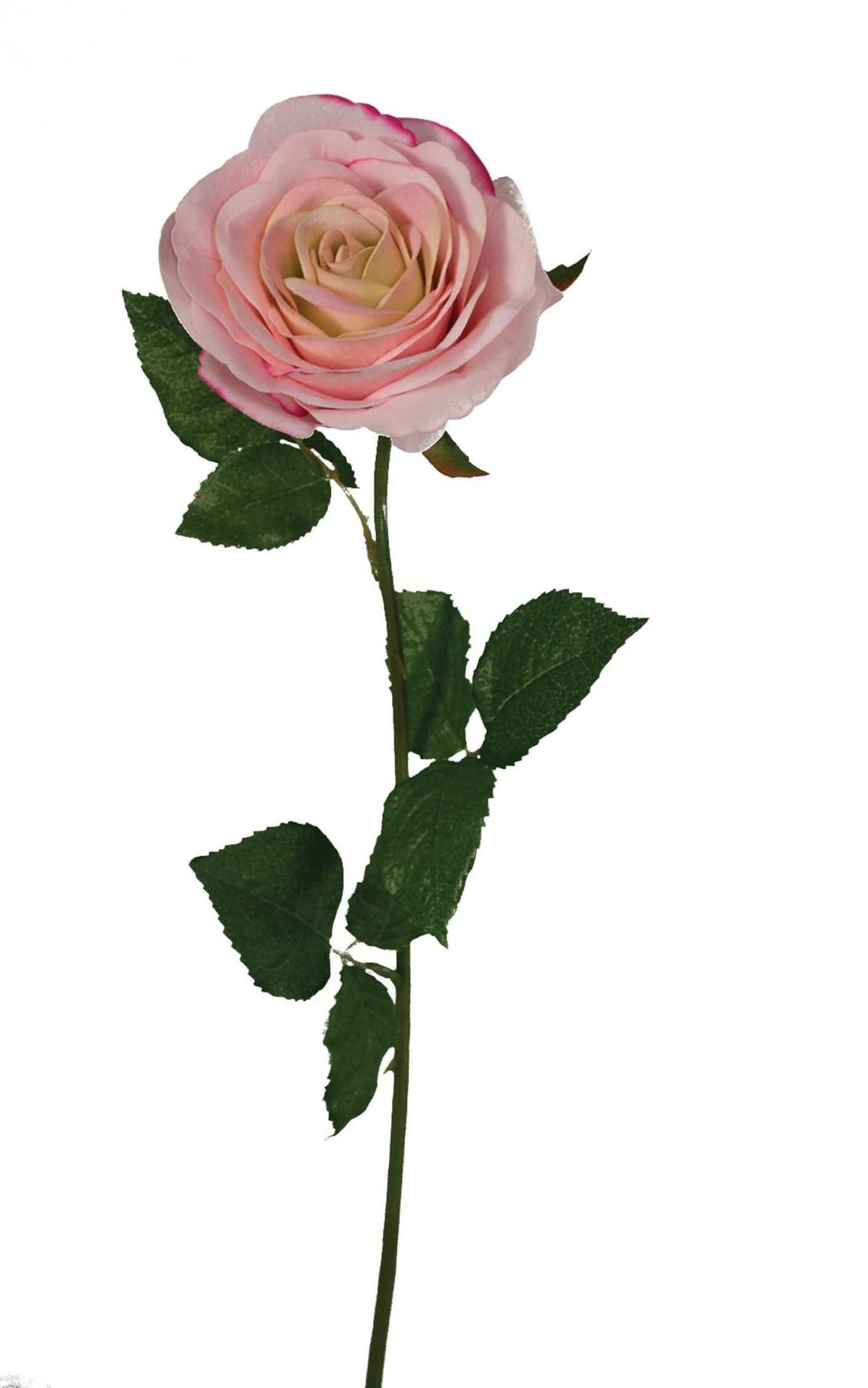 """SS2019PK - 19"""" Natural Pink Open Rose Stem $25 per dozen SS2019PK"""