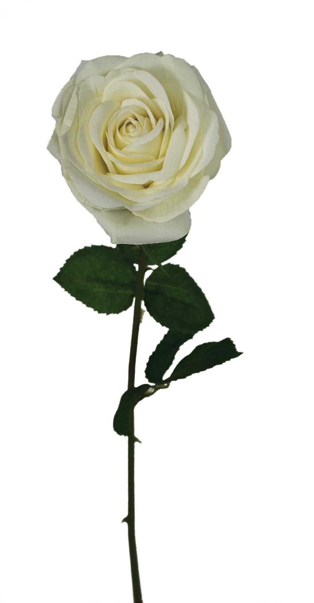 """SS2019WT - 19"""" Natural White Open Rose Stem $25 per dozen SS2019WT"""