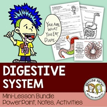 Digestive System - Human Body PowerPoint and Handouts