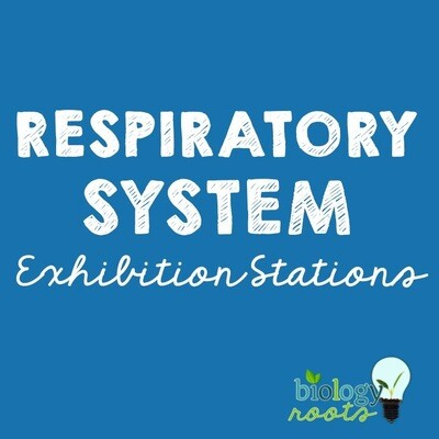 Respiratory System Exhibition Stations Bundle