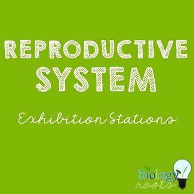 Reproductive System Exhibition Stations