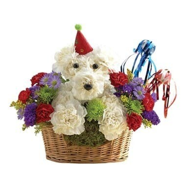 Happy Birthday Dog-Able
