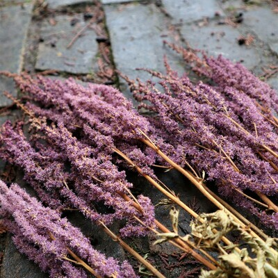 Deep Purple Dried Astilbe Blossoms