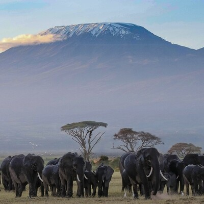Mt Kilimanjaro Hike Only Deposit
