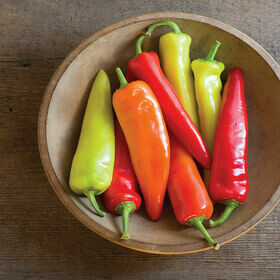 Hot Wax Pepper Plant