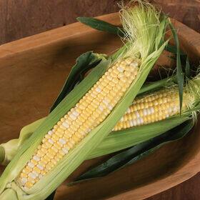 Sweet Corn Vegetable Plant