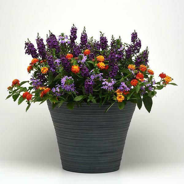 Shindig for sun (color bowl)