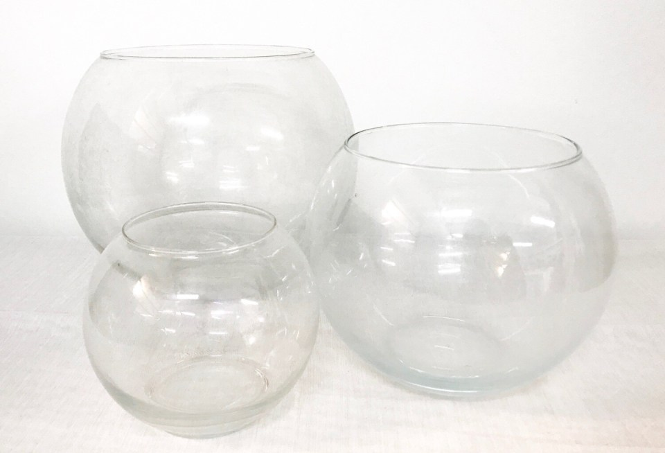 Fish Bowl 8