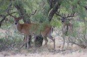 Annual Hunting Lease Membership