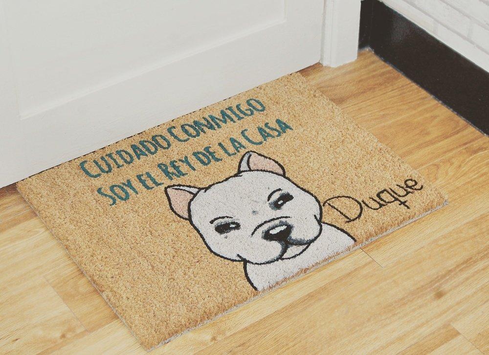 Staffy terrier