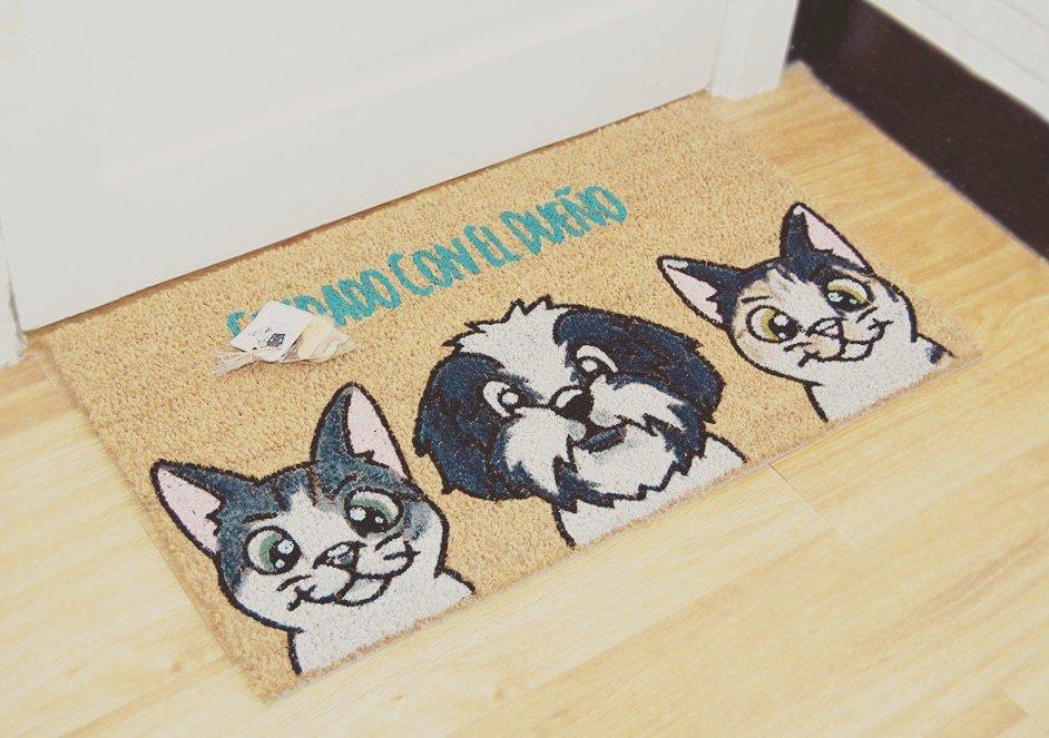 Gatos estándar y Shit-zu