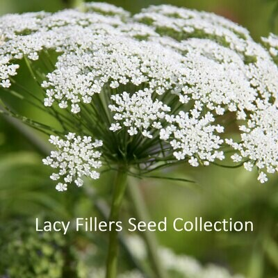 Lacy Fillers Seed Collection