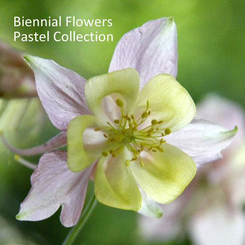 Biennial Flowers Pastel Collection