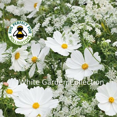 White Garden Seed Collection 00265