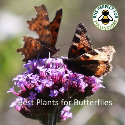 Butterfly Garden Seed Collection