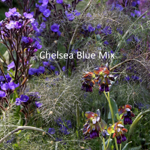 Chelsea Blue Seeds Mix 00321
