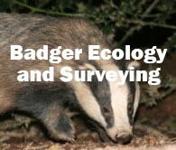 Badger Ecology and Surveying (Exeter): 2nd September 2019