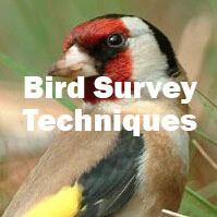 Bird Survey Techniques (Farnham): Tuesday 7th April 2020