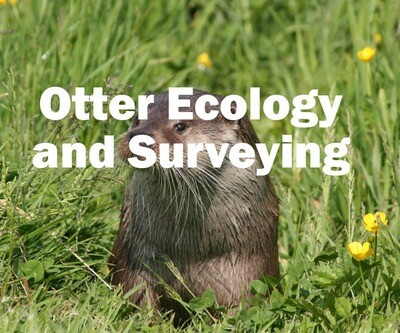 Otter Ecology and Surveying (Exeter): 23rd March 2020
